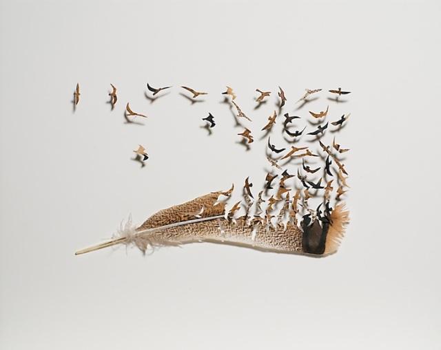 intricate feather cutouts chris maynard 11