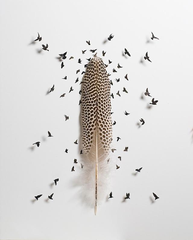 intricate feather cutouts chris maynard 2