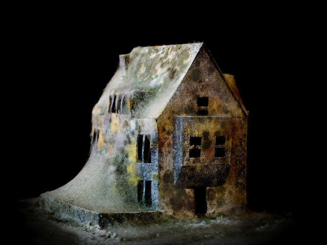 Mold covered model buildings Daniele del Nero 6