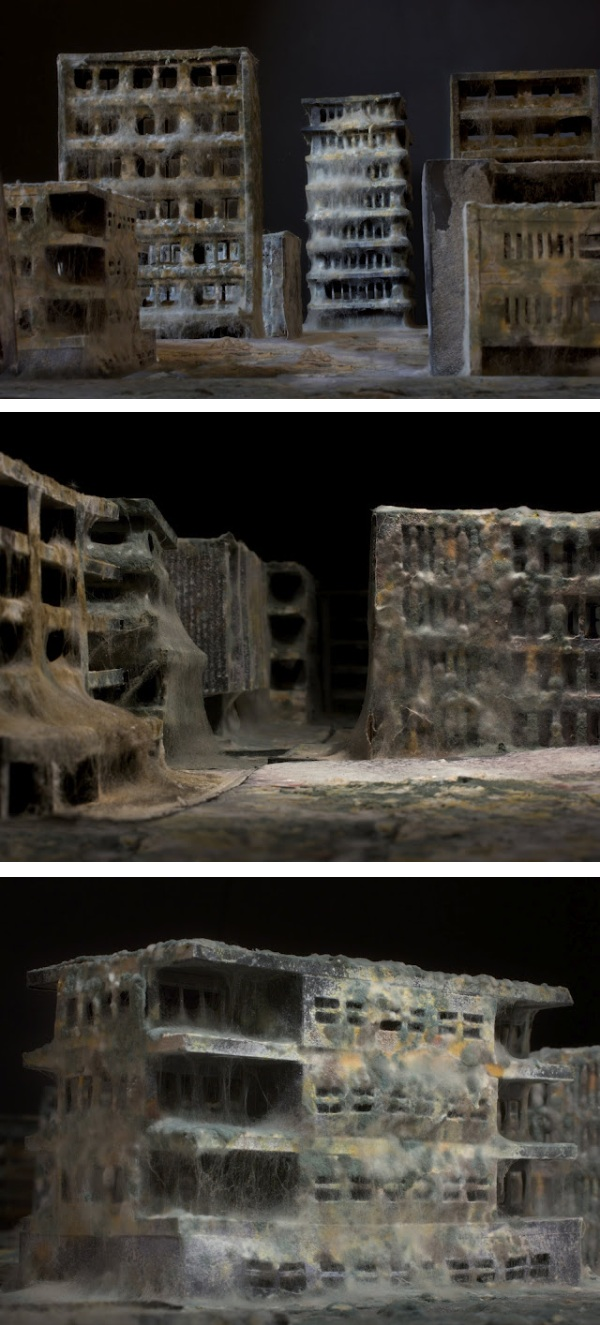 Mold covered model buildings Daniele del Nero 9