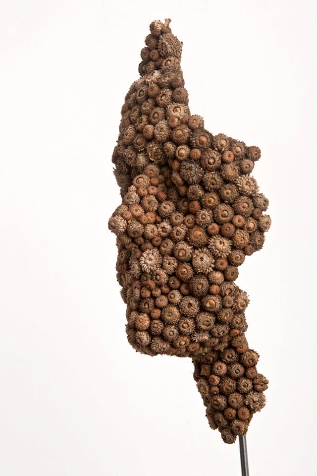 Anna Gillespie Nature Art Sculptures Acorns Beechnut Casings Bronze