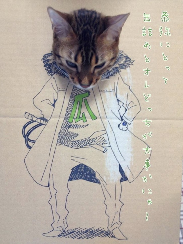 How to celebrate the birthday of your cat toshiya86 10