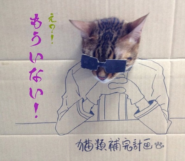 How to celebrate the birthday of your cat toshiya86 8