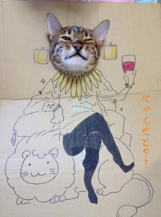 How to celebrate the birthday of your cat toshiya86
