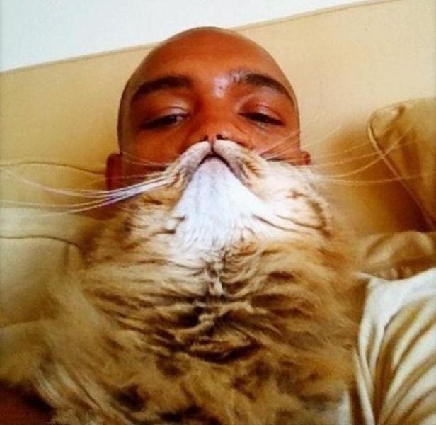 Cat Beards illusion 2