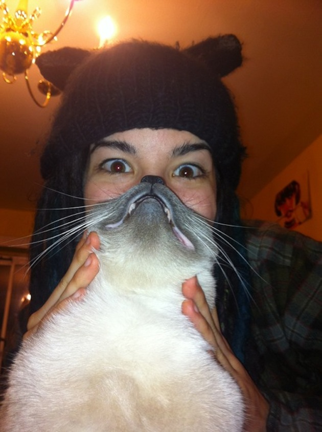Cat Beards illusion 4