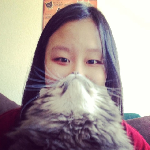 Cat Beards illusion 5