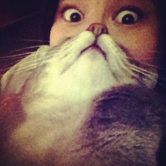 Cat Beards illusion 8