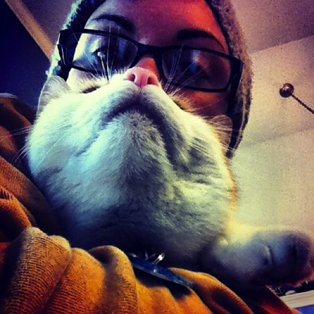 Cat Beards illusion