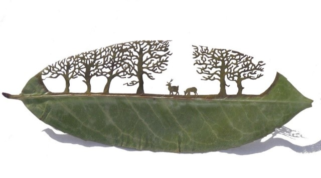 Lorenzo Manuel Durán leaf cutting art 15