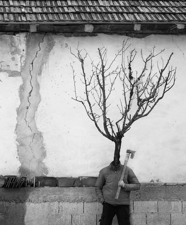 tree people Marko Prelic 11