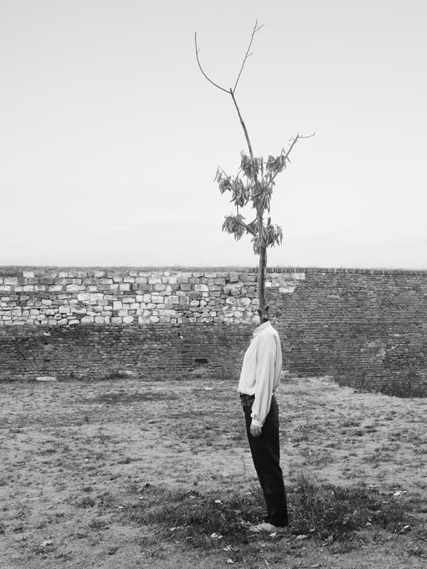 tree people Marko Prelic 9