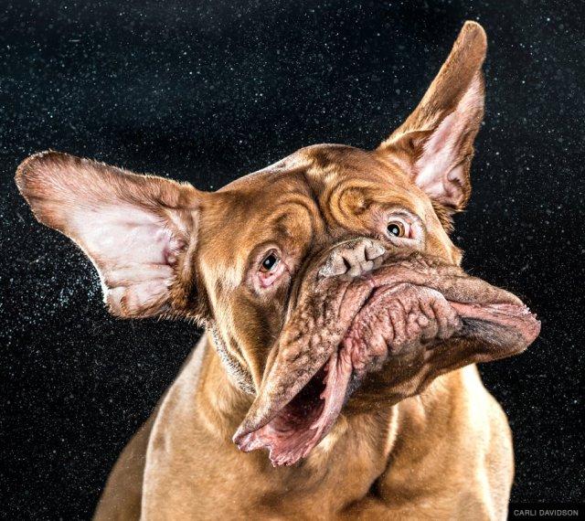 Carli Davidson shake dog 3