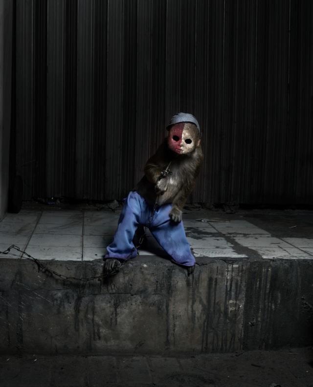 haunting monkeys with doll heads Pertu Saksa 3