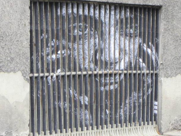 zebrating street art Anamorphic 18
