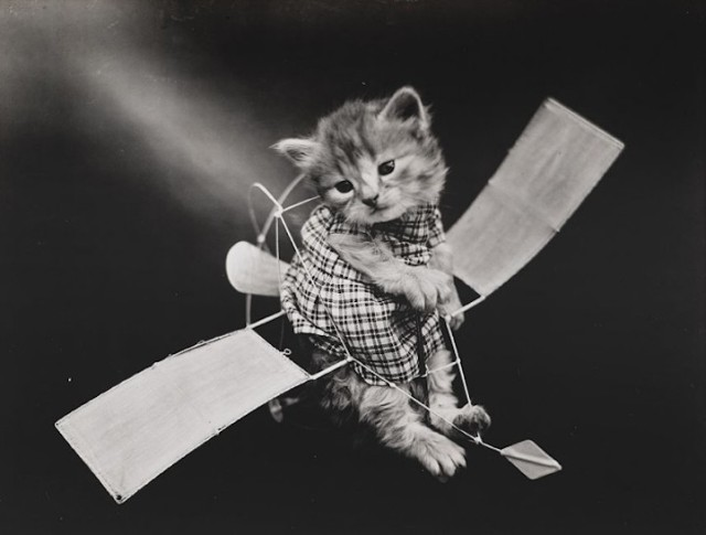 Harry Whittier Frees the original LOLcat 11