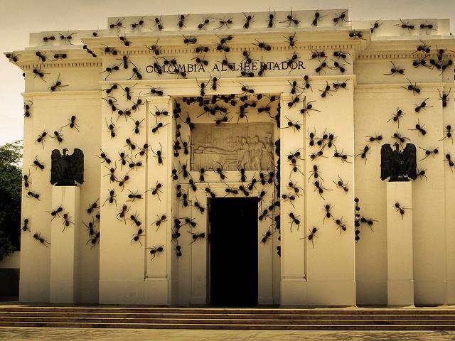 Invasive Ant  Installations Rafael Gómezbarros 6