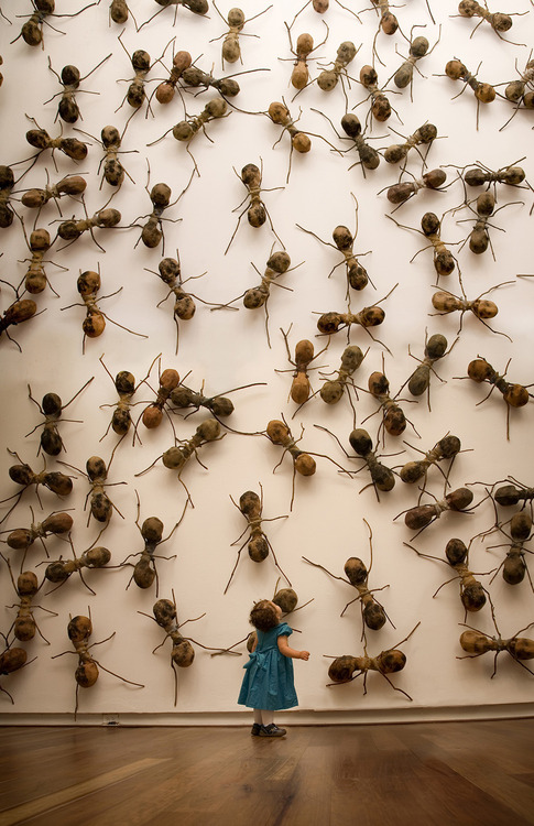 Invasive Ant  Installations Rafael Gómezbarros