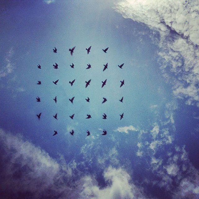 shaun kardinal  flying formation 7