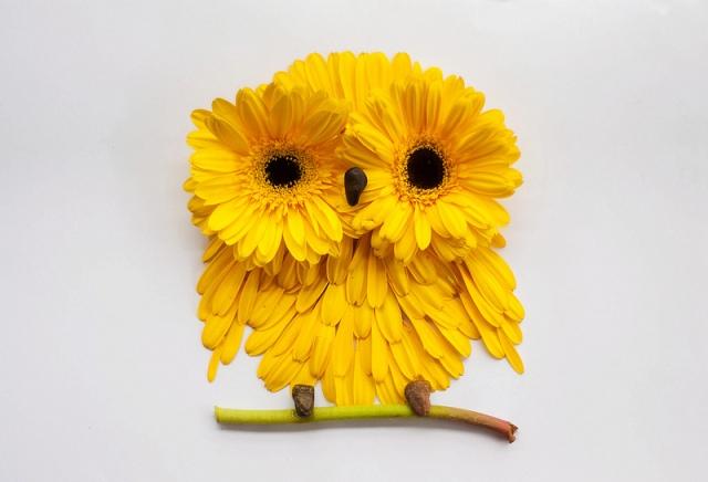 flower illustrations lovelimzy 9