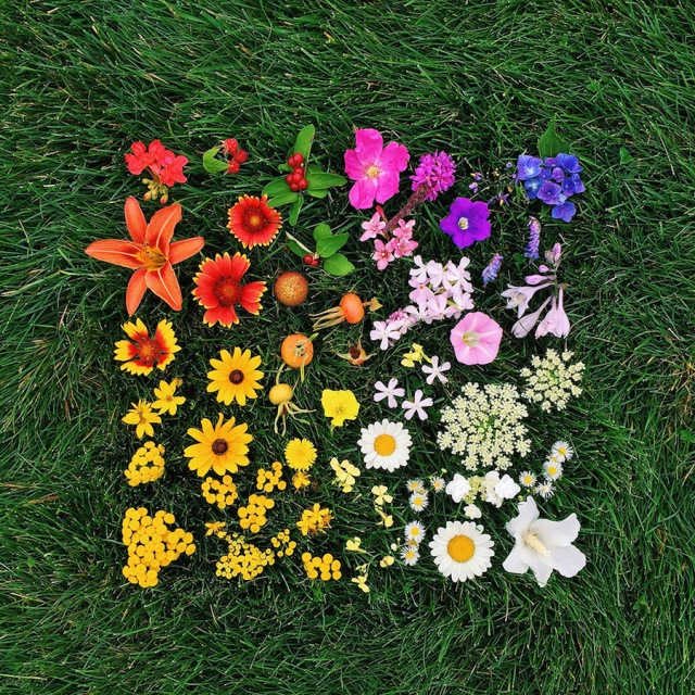 Arrangement color coded photography Emily Blincoe 5