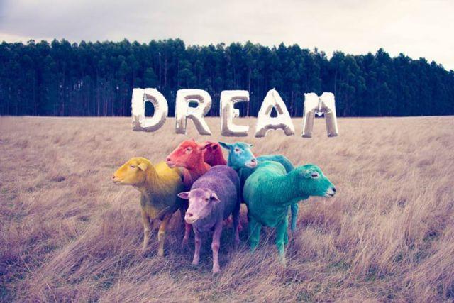 Gray Malin dream Multicolored sheeps 2