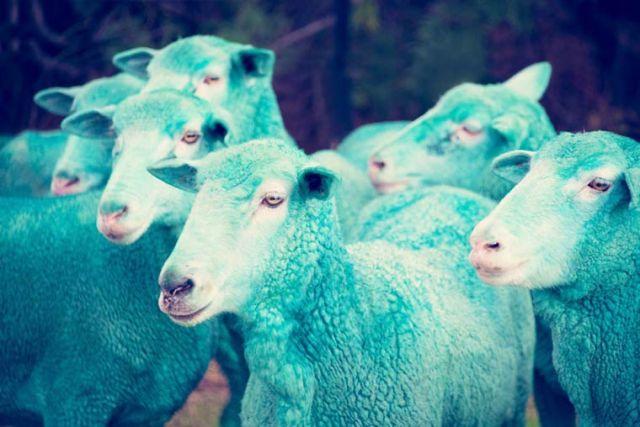 Gray Malin dream Multicolored sheeps