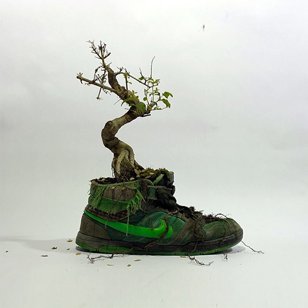 Just Grow It Christophe Guinet  Mr. PLANT 5