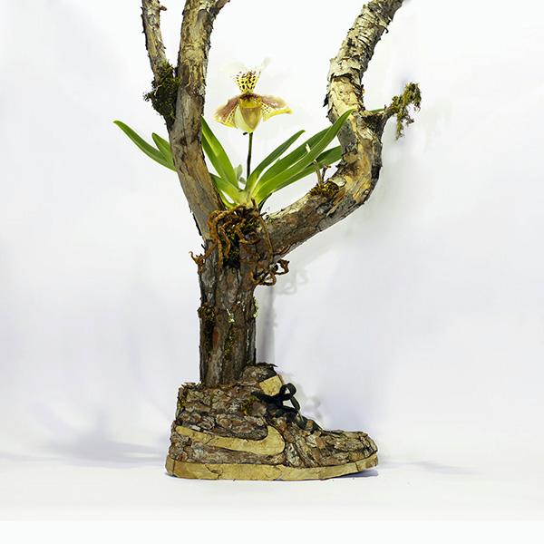 Just Grow It Christophe Guinet  Mr. PLANT 9