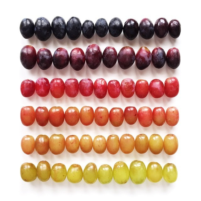 food gradients Brittany Wright 11